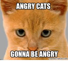 Angry Meme Cat - search angry cat meme memes on me me