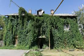 plante verte dans une chambre la chambre est envahie avec le lierre vert chambre couverte de