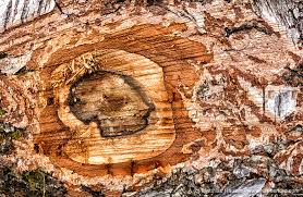 matthias hauser fotografie wood macro photos beautiful wooden