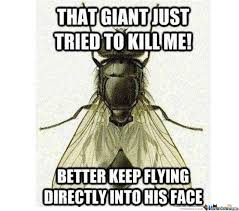 Kill Me Meme - that giant just tried to kill me funny fly meme
