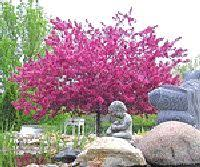 19 best trees and bushes for landscaping images on