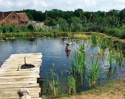 the ecological and health benefits of natural swimming pools