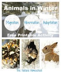 animals in winter migration hibernation u0026 adaptation printable