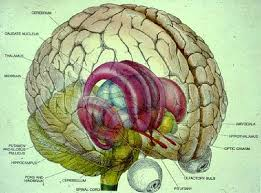 Why Is Anatomy And Physiology Important Research In Brain Function And Learning