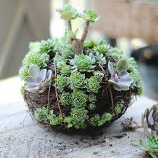 Ideas For Indoor Succulents Design Ideas For Indoor Succulents Design Ebizby Design
