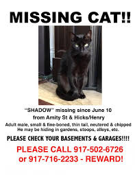 Missing Cat Meme - missing cat cobble hill surrounding areas brooklynian