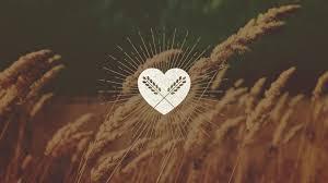 thanksgiving church bulletin message u201cthanksgiving sunday u201d 2015 the christian u0027s happiness