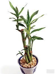 house plants no light low light indoor plants bathroom pinterest low lights