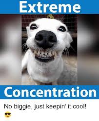 Concentration Meme - 25 best memes about no biggie no biggie memes