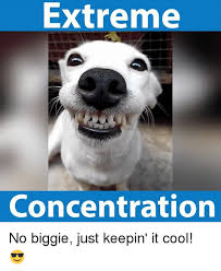 Concentration Meme - extreme concentration no biggie just keepin it cool meme on me me