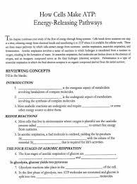 cellular respiration worksheet free worksheets library download