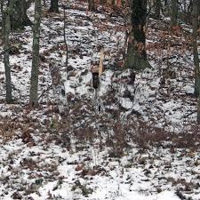 Tree Trunk Hunting Blind Amazon Com Ghostblind 4 Panel Predator Blind Hunting Blinds