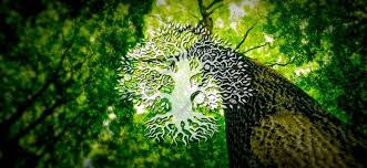 tree symbol meaning celtic tree of life the meaning and history of the ancient symbol