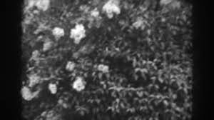 Flowers Winchester - 1938 beautiful flowers born on plants growing among stones