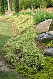 garden design garden design with six groundcover plants for damp