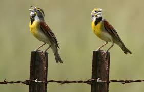 quizzes bird watcher u0027s digest