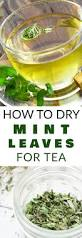 best 25 tea plant ideas only on pinterest green tea plant