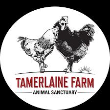 strong hearts vegan power team cape cod ragnar u2014 tamerlaine farm
