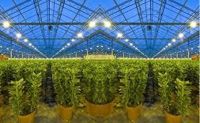 light requirements for growing tomatoes indoors beginner s guide to calculating garden lighting needs