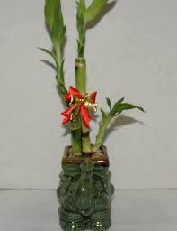 elephant vase ceramic live 3 style lucky bamboo plant arrangement with ceramic elephant
