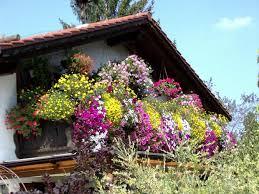 geranien balkon gestaltungsideen für balkon und dachterrasse mein schöner garten
