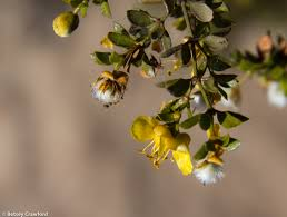 native plants in the desert native plants the genius of their place