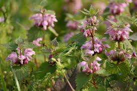 plants native to japan 20 flowers that are endemic species in japan tsunagu japan