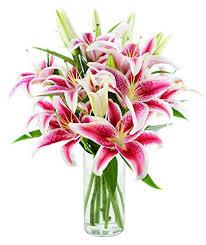 stargazer bouquet bouquet of 8 fresh cut stargazer lilies with vase