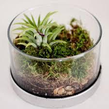 83 best terrarium images on pinterest terrarium ideas gardening