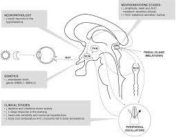 neuroendocrine abnormalities in parkinson u0027s disease journal of