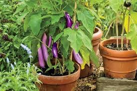 container vegetable garden plans vegetable garden container ideas