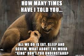 Lion Meme - angry lion king dad meme on imgur