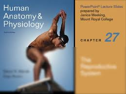 Human Anatomy And Physiology Chapter 1 Chapter 27 Reproduction Ppt Anatomy U0026 Physiology 2020 With