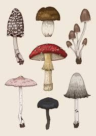 best 25 mushroom drawing ideas on pinterest natural history