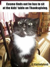 true book addict cat thursday happy thanksgiving
