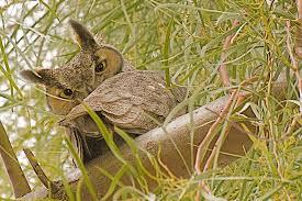 Arizona wildlife images Desert wildlife explore the boulders waldorf astoria resort jpg