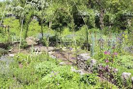 ornamental vegetable garden with living willow arches and raised
