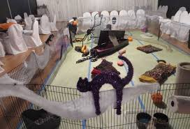 Ferret Costumes Halloween Halloween Party Thriller U2013 Ferret Dreams Rescue U0026 Adoption