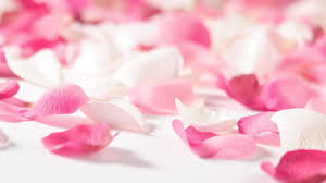 pink flower pink flower pedals 19309 1920x1080 px hdwallsource