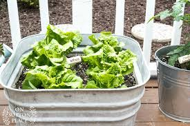 Container Gardening For Food - easy container gardening with vegetables and herbs