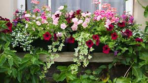top 7 flowering container garden plants for sunny spots