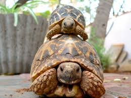 Tortoise Meme - 11 reasons why tortoises are the best