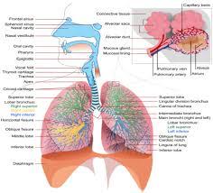 Right Side Human Anatomy Washhouseanatomy The Wonders Of The Human Body