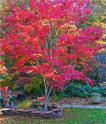 25 unique small ornamental trees ideas on small