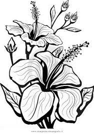 fiori disegni disegno ibisco 1 categoria natura da colorare