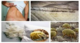 acariens de cuisine détruisez les 1 5 millions d acariens qui vivent dans votre lit avec