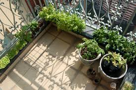 vertical balcony vegetable garden balcony vegetable garden looks