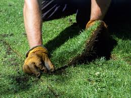 caring for your lawn year round hgtv related to lawn care