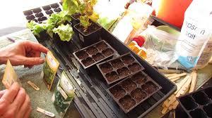 for new gardeners how to seed start lettuce arugula corn salad