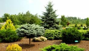 tree shrub winlawn management